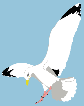 seagull, a character for a flash player game