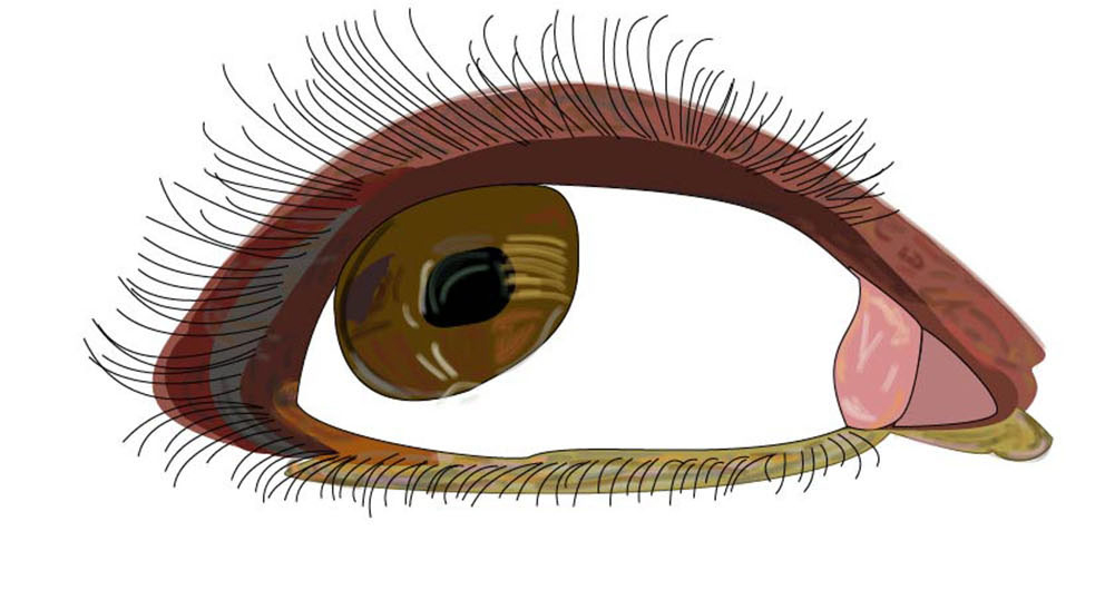 illustration of my eye made in illustrator